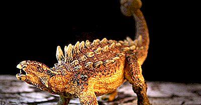 Ankylosaurus Fakta: Utdöda Djur Av Världen