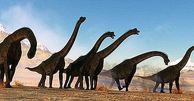 Datos De Brachiosaurus: Animales Extintos Del Mundo