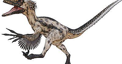 Fapte Deinonychus: Animalele Dispărute Ale Lumii