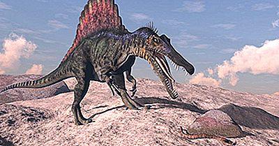 Fatos Do Espinossauro: Animais Extintos Do Mundo