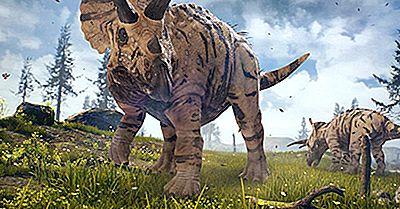 Fatos Triceratops: Animais Extintos Do Mundo