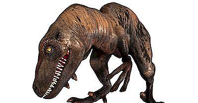 Fatos Velociraptor: Animais Extintos Do Mundo