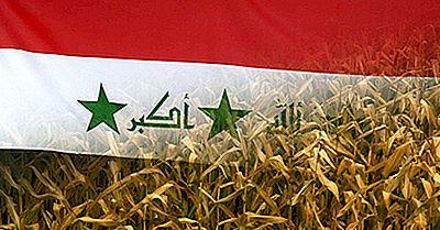 Que S'Est-Il Passé Pendant La Catastrophe De 1971 Sur Les Grains De Poison En Iraq?