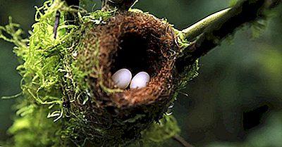 Hvilken Fugl Legger Det Minste Egget?