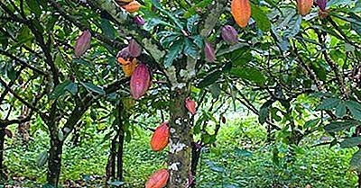 Tout Sur L'Industrie Du Cacao