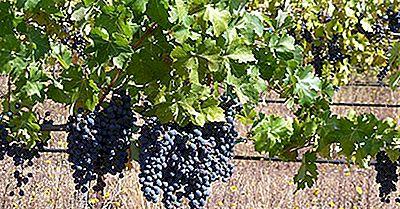 Países Con La Mayoría De Los Viñedos De Uva De Vino