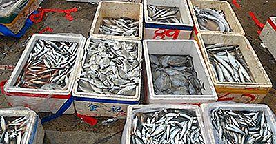 Førende Lande Inden For Fiskeri Og Akvakulturhøst