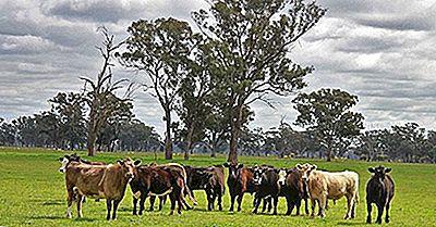 Las 10 Principales Exportaciones Agrícolas De Australia