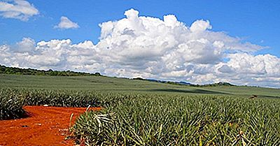 Pays Producteurs D'Ananas