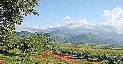 I Migliori Paesi Produttori Di Sisal Nel Mondo