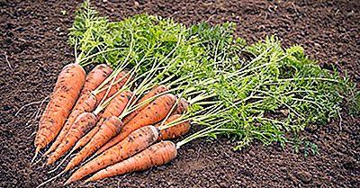 ¿Dónde Se Cultivan Las Zanahorias Y Los Nabos?