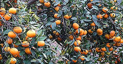 ¿Dónde Se Cultivan Las Clementinas?