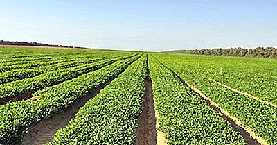 Wo Werden Erdnüsse Angebaut?
