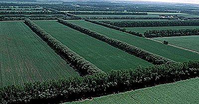 Protección Contra El Viento Y Barreras: Control De La Erosión Eólica En La Agricultura