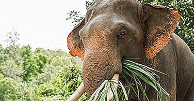 10 Animales Que Son Poco Probables Herbívoros