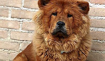 10 Razze Di Cani Con Il Morso Più Forte