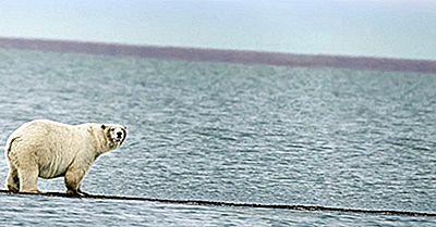 10 Vigtige Fakta I Forbindelse Med Beauforthavet
