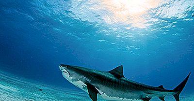 Die 10 Größten Fischarten, Die Heute Leben