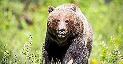 10 Animales Más Peligrosos En Canadá