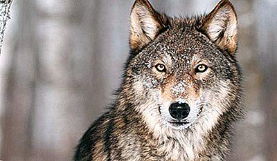 Kanada Gefährliche Tiere