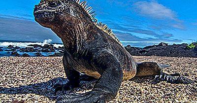10 Av Verdens Mest Fantastiske Lizardarter