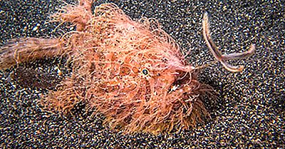 10 Din Cele Mai Ciudate Pești Din Lume
