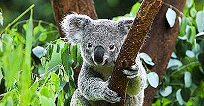 5 Marsupiaux Qui Ne Sont Pas Des Kangourous