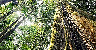 5 Delle Foreste Più Minacciate Del Mondo