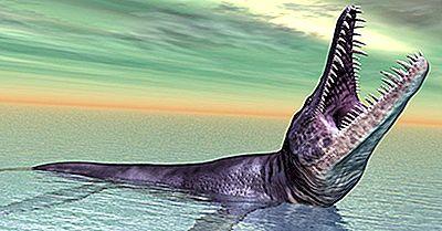 8 Animaux Préhistoriques Étonnants (Qui Ne Sont Pas Des Dinosaures)