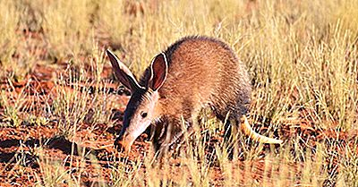 Aardvark Facts - Animals Of Africa