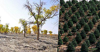 Împădurirea Și Reîmpădurirea