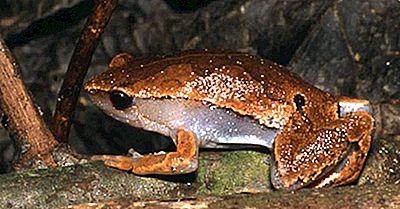 Specie Anfibie Dell'Ecuador