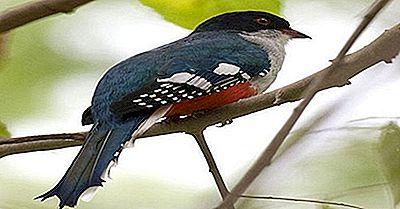 Tiere Und Vögel Von Kuba