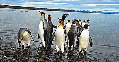 Animales Encontrados En Chile