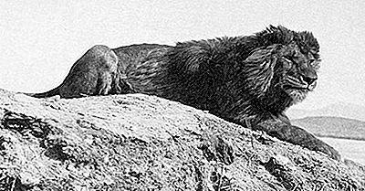 Tiere, Die Im 20. Jahrhundert Ausgestorben Sind