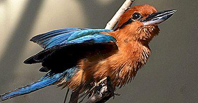 Animais Que Estão Extintos Na Natureza