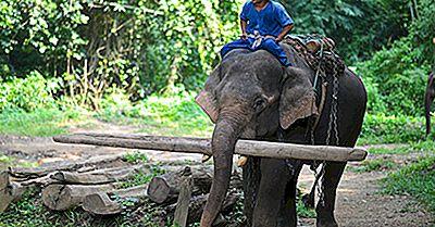 Asiatiske Elephant Fakta: Dyr I Asien