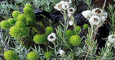 El Punto De Acceso A La Biodiversidad De Cape Floristic Region, Sudáfrica