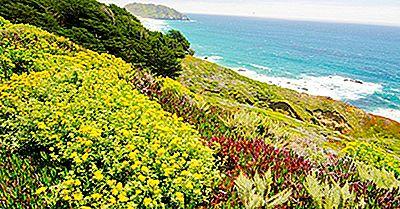 Gli Hotspot Di Biodiversità Trovati Nell'America Settentrionale E Centrale