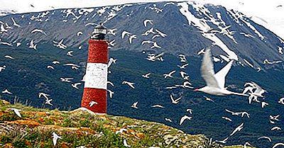 Uccelli Con Le Migrazioni Più Lunghe
