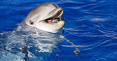 Bottlenose Dolphin Fakten: Tiere Von Nordamerika
