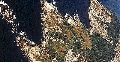 Brasiliens Forbudte Snake Island