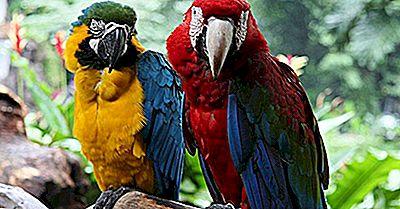 Brilhante E Bonito: Os Tipos De Araras Que Vivem No Mundo Hoje