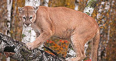 Cat Fapte - Animale Ale Lumii