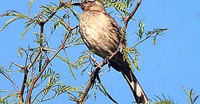 Speciile Endemice De Pasăre Din Chile