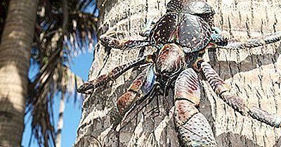 Fatos Dos Caranguejos De Coco: Animais Do Mundo