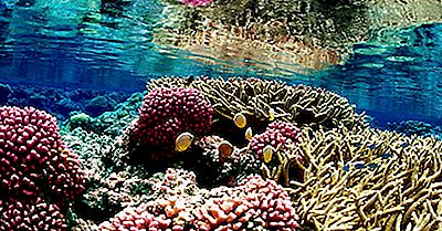 Recifes De Coral - Localização, Formação E Importância
