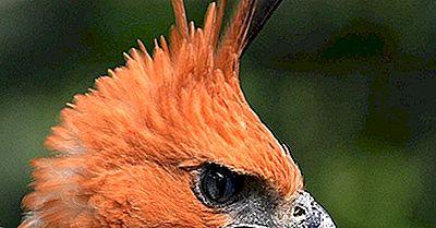 Könnte Der Illegale Haustierhandel Viele Der Vögel Indonesiens Zum Aussterben Bringen?