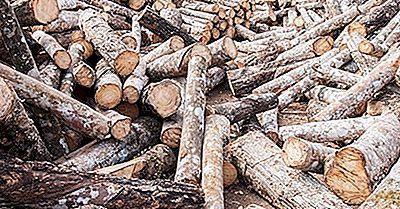 Lande Eksporterer De Højeste Mængder Af Tropiske Logs
