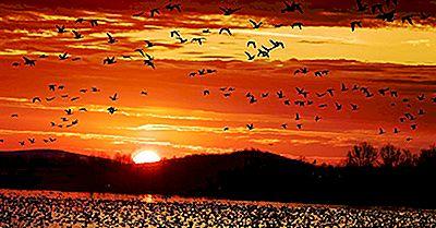 Dage Og Helligdage Dedikeret Til Fugle